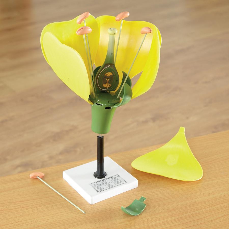Image result for a flower model