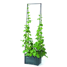 Pea and Bean Planter  medium