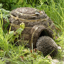 Hedgehog House  medium