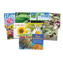 KS1 Plant Life Cycle Books 10pk  medium