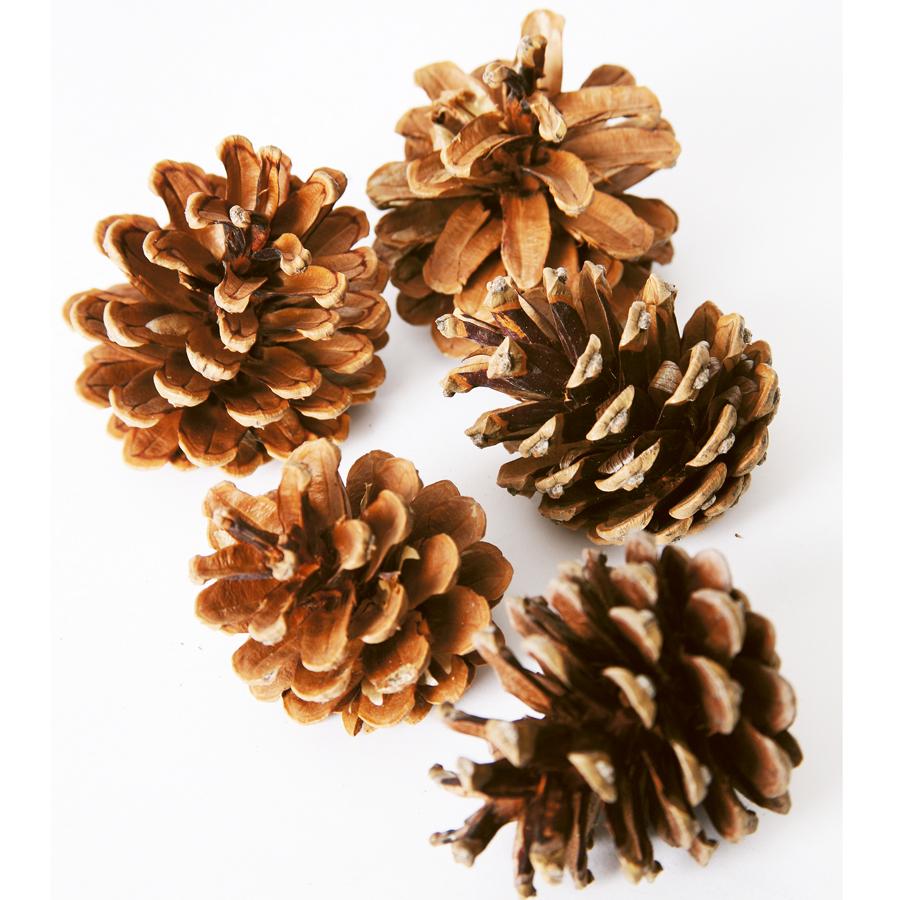 Buy Natural Pine Cones Tts International