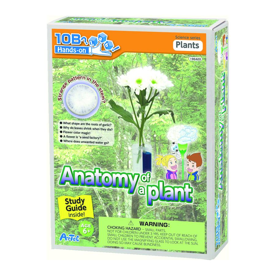 Buy Anatomy Of A Plant Experiment Kit Tts International