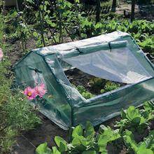 Cold Frame Greenhouse  medium
